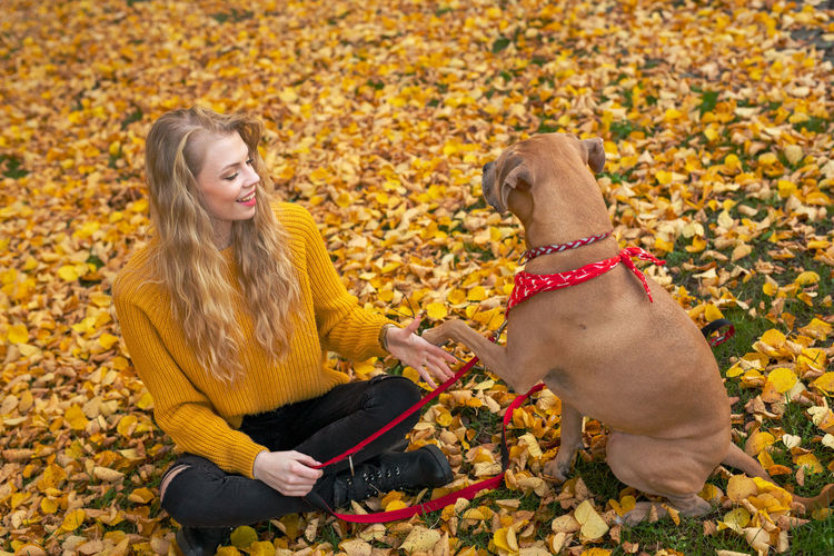 Low section of woman with dog sitting on autumn leaves
