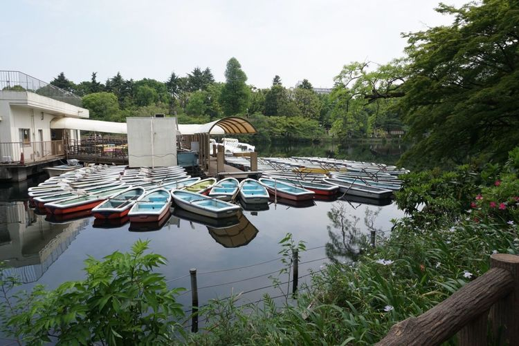 Pond popular