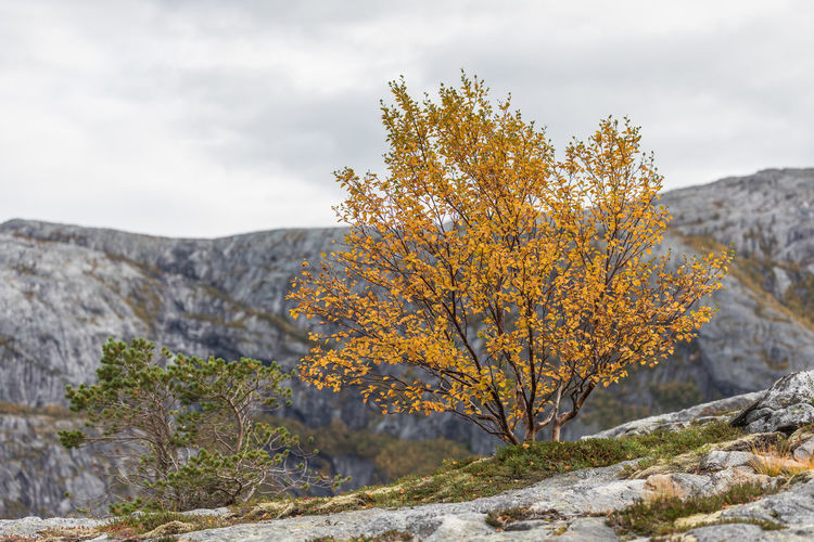 Fall Beauty Hiking Nature Northern Norway Norway Adventure Autumn Beauty In Nature Birch Tree Clouds And Sky Colorful Day Fall Landscape Mountain Nature No People Nordland Outdoors Rock - Object Scenery Scenics Sky Tranquility Tree
