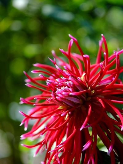Flower EyeEm Nature Lover Natural Nature_collection Naturelovers Nature Flowers Daria Red Red Flower