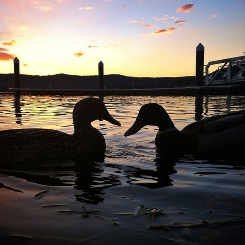 #sunset #sun #clouds #skylovers #sky #nature #beautifulinnature #naturalbeauty #photography #landscape Water_collection Perfect Day For Photography Lovely Weather For Ducks