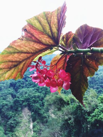 Flower Nature Beauty In Nature Growth Plant Fragility Leaf Flower Head No People Close-up Outdoors Freshness Day Inflorescence 物