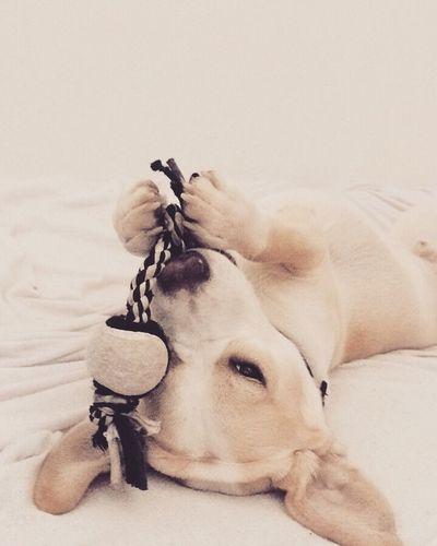 Happy Dog Bug Love Forever Together EyeEm Foto Cute Czechgirl Inlove Beauty Followme