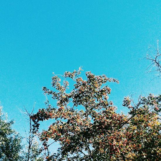небо ягоды дерево ветви листья желтые осень Check This Out That's Me Enjoying Life Hanging Out
