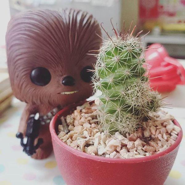 arrrrr Minicactus Chewbacca Chewy Pop Toy Arrr