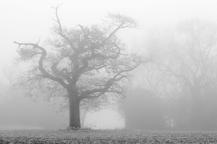 Misty Trees Black & White Skeleton Beauty In Nature Blackandwhite Branch Fog Foggy Nature No People Outdoors Scenics Tranquil Scene Tranquility Tree Water