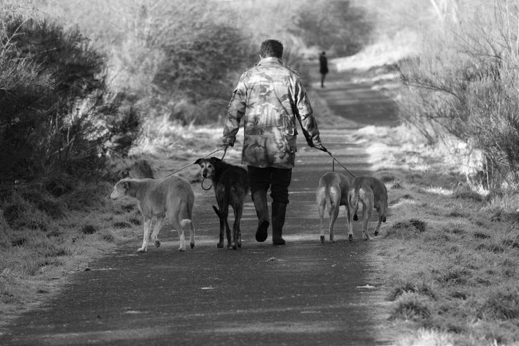 Rear view of a man walking with dogs on street
