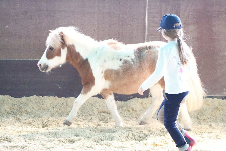 Little girl and her little horse Girl Pets Full Length Standing Sand Livestock Pony