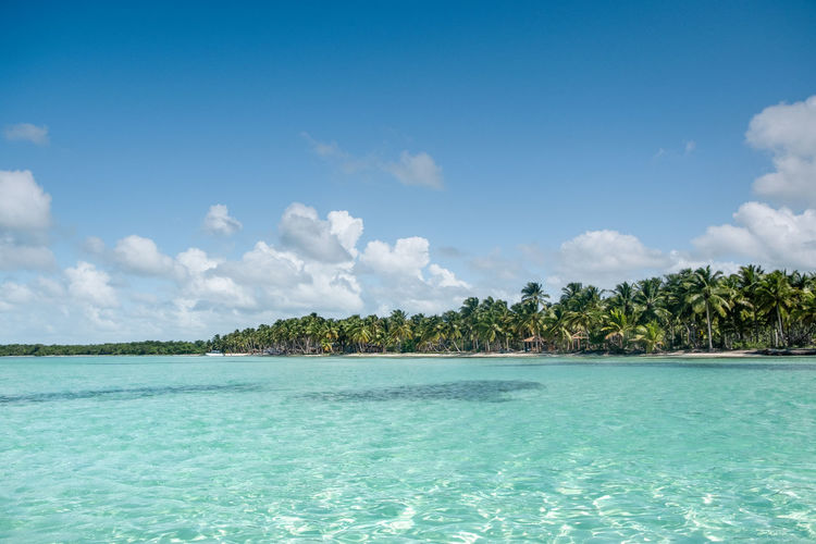 Sky Beauty In Nature Scenics - Nature Tranquil Scene Plant Cloud - Sky Sea Water Nature No People Waterfront Day Idyllic Land Blue Tropical Climate Outdoors Turquoise Colored Clean Palm Tree Island Copy Space Caribbean Sea Beach Latin America