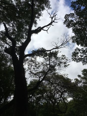 Low Angle View Sky Beauty In Nature Tranquility No People Day Branch Tree Growth Nature Outdoors Parque Do Piqueri, Nature, Trees Nature