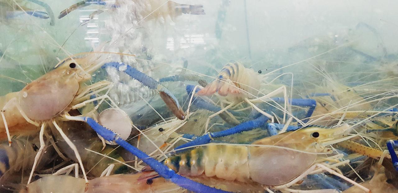 VIEW OF FISH IN AQUARIUM