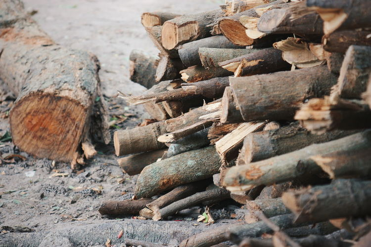 timber Longan Tree Tree Stick - Plant Part Stick Forestry Industry Woodpile Stack Timber Wood - Material Log Deforestation Lumber Industry Heap Tree Ring Tree Trunk Fallen Tree Branch Woods Textured  Firewood