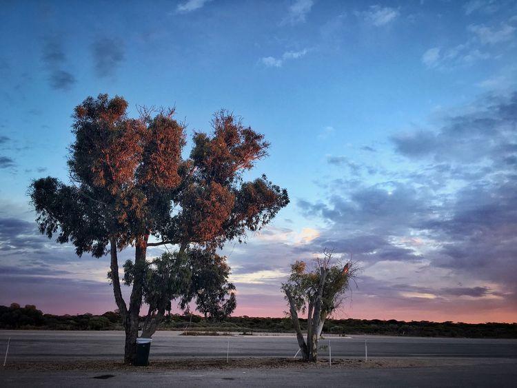 Roadside Trees Nullarbor Plain Australian Landscape Australia & Travel Travel Roadtrip Roadside Two Trees Trees Boarder Nullarbor Australia Sunrise Cloud - Sky Tree Sky Nature Beauty In Nature Growth Outdoors