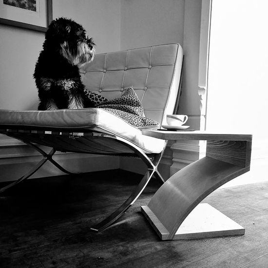 Indoors  Dog Barcelona Chair Side Table Design Black & White Light And Shadow