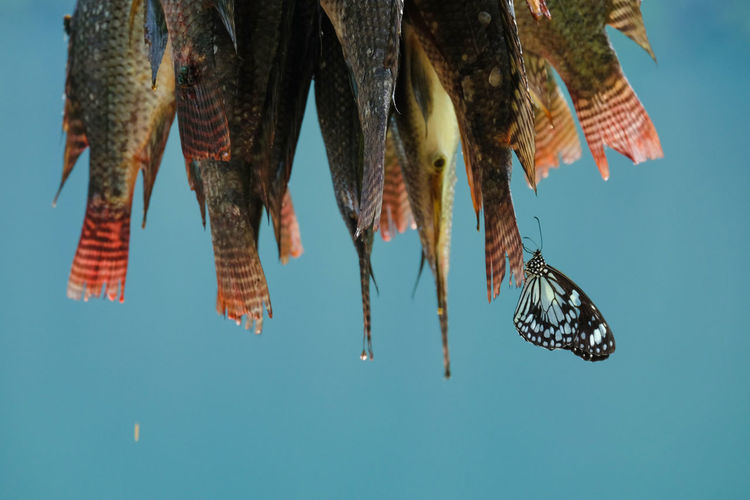Drying fish against sky