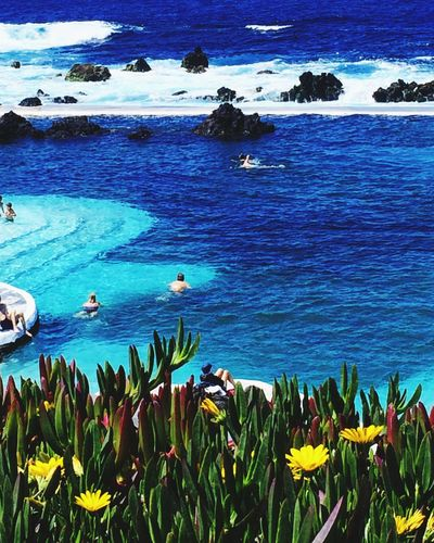 People swimming in the natural sea pools of Porto Moniz, Madeira Island. Portugal. Portugal Madeira Porto Moniz Madeira Sea Pool Natural Pool Water Sea Plant Beauty In Nature Nature Blue Flower Scenics - Nature Flowering Plant Beach
