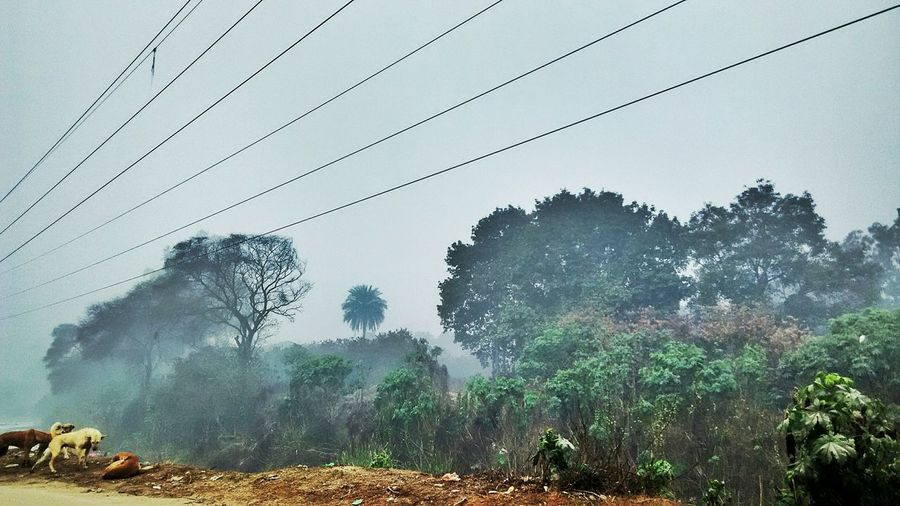 Tree Nature No People Growth Sky Day Large Group Of Animals Outdoors Beauty In Nature Clear Sky Foggy Morning Foggyweather HDR Hdr_captures