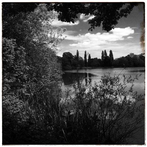 Favourite Places Dog Walking Parklife Monochrome Landscape IPhoneography