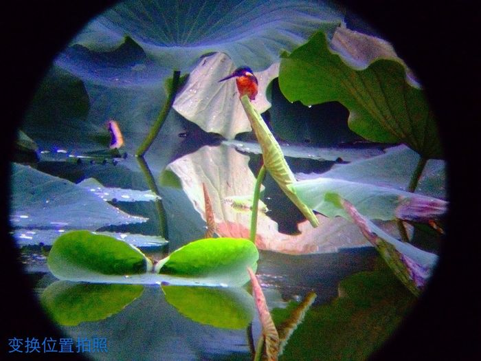 4s望远镜拍照于数十米之外的樱花湖 Hello World