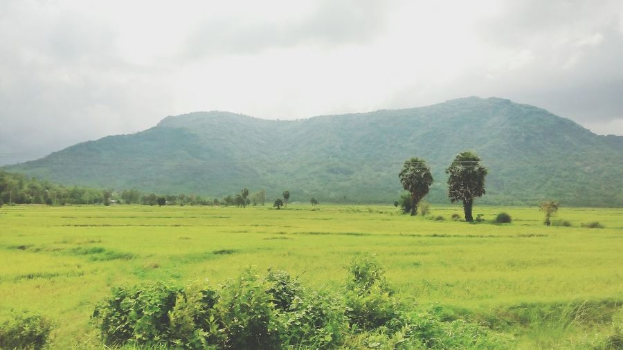 Scenic view of grassy field by mountains against cloudy sky