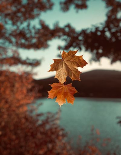 Autumn colors Outdoor EyeEm Nature Photography Nature Trees Lake Leaf Plant Part Nature Autumn Plant Close-up Tree Focus On Foreground Day No People Beauty In Nature Change Selective Focus Vulnerability  Tranquility Fragility Dry Outdoors Growth Orange Color