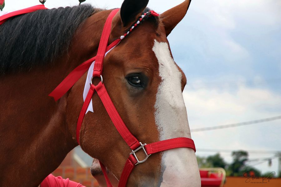 Anheuser-Busch Clydesdales Animal Themes Bridle Brown Close-up Day Domestic Animals Horse Livestock Mammal Nature No People One Animal Outdoors Sky
