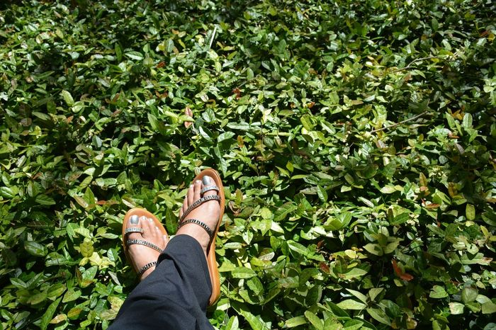 at rest among the green foliage Personal Perspective Human Body Part Green Color Lifestyles One Person Real People Growth Outdoors Leisure Activity One Woman Only Day Footwear Feet Green Leaves Footselfie Ground Cover Groundcover Rhinestones Fashion Sandals Personal Style Foliage Beauty In Nature Nature Female