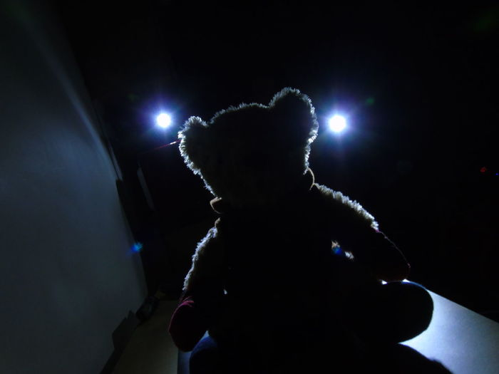 Teddy bear Toys Night Nightphotography Night Lights Silhouette Silhoutte Photography Dark Black Background Indoors  Spotlight Lights And Shadows Shadow And Light Teddy Flashlights Flashlight Art Flashing Lights Lights In The Dark Lieblingsteil The City Light Welcome To Black Pet Portraits The Week On EyeEm