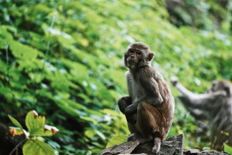 Monkey sitting on tree in forest