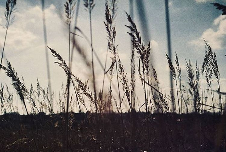 Analog Analogue Analoguephotography Film 35mm Filmshooters Filmphotographer Photographer Sky Art Clouds Photooftheday