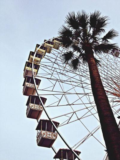 Leonie Filter Bigwheel Palmtree Christmas