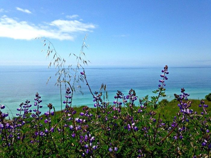 Beauty In Nature Horizon Over Water Nature Sea Freshness Outdoors Tranquil Scene Usal Pacific Ocean