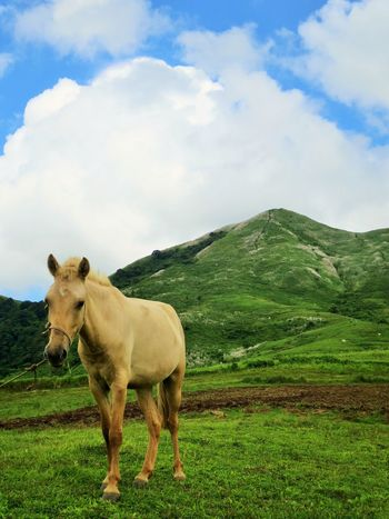 mountain horse 1 Horses Animal Themes Beauty In Nature Cloud - Sky Domestic Animals Field Grass Horse Horse Photography  Livestock Mammal Mountain Nature One Animal Outdoor Photography Outdoors Sky Tranquility