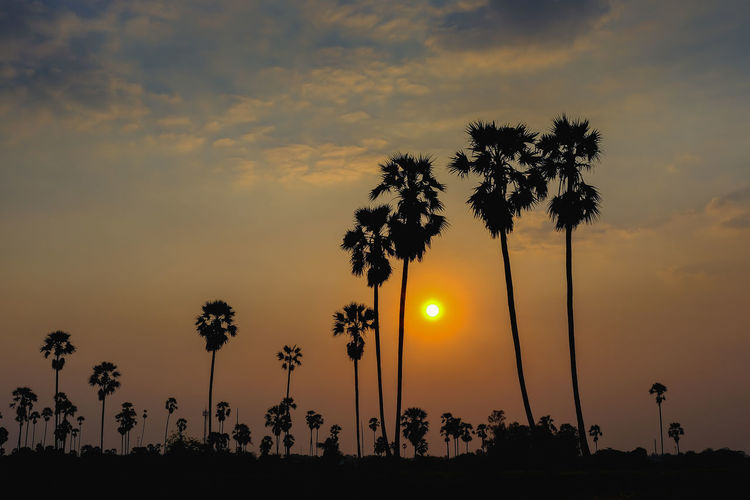 Silhouette Beauty In Nature Cloud - Sky Coconut Palm Tree Growth Idyllic Low Angle View Nature No People Orange Color Outdoors Palm Tree Plant Romantic Sky Scenics - Nature Shadow Silhouette Sky Sun Sunset Tranquil Scene Tranquility Tree Tropical Climate Tropical Tree