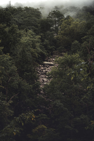 Taken somewhere in the Mountains of Virginia Weather Beauty In Nature Day Environment Foggy Foliage Forest Green Color Growth Land Lush Foliage Moody Moodyphotography Nature No People Non-urban Scene Outdoors Plant Scenics - Nature Trail Tranquil Scene Tranquility Tree