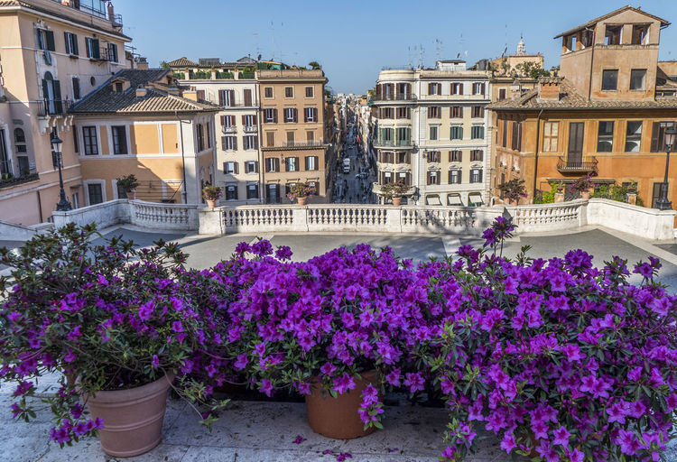 Purple flowering plants by buildings against sky