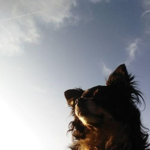 Pets Dog Portrait Silhouette Sky Close-up