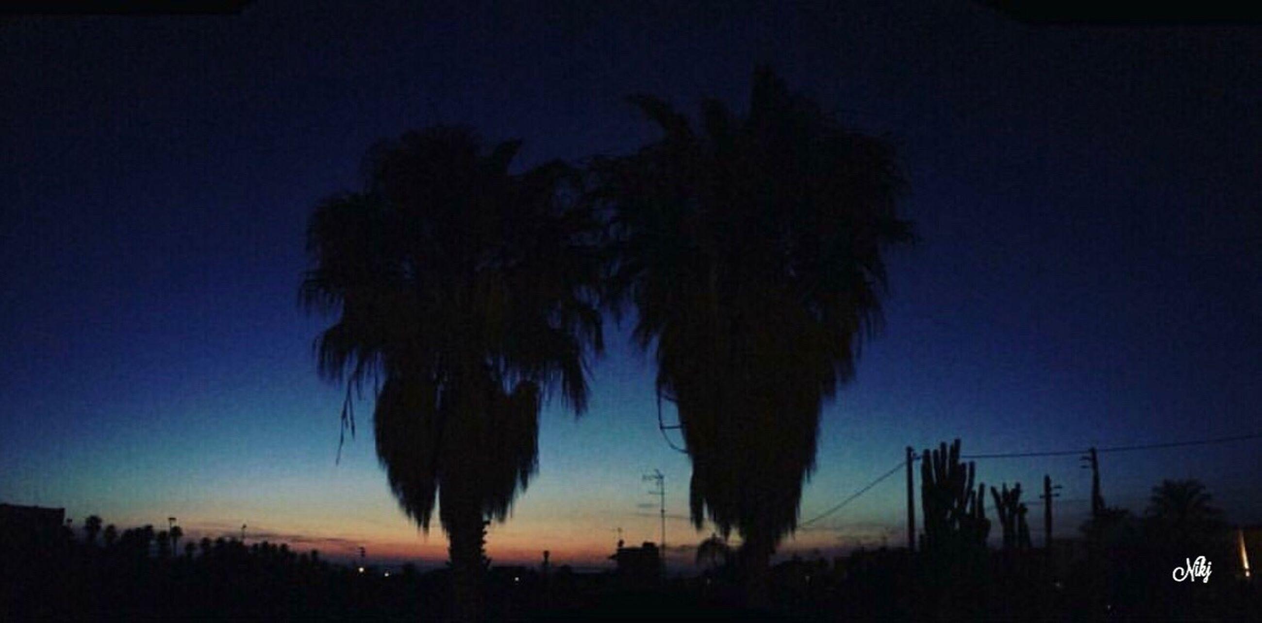 silhouette, tree, night, sky, outdoors, no people, nature