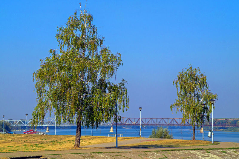 park on river shore with railway bridge in the background Tree Nature Sunlight Tranquility No People Outdoors Park Relaxation Water Clear Sky Tranquil Scene River Shore
