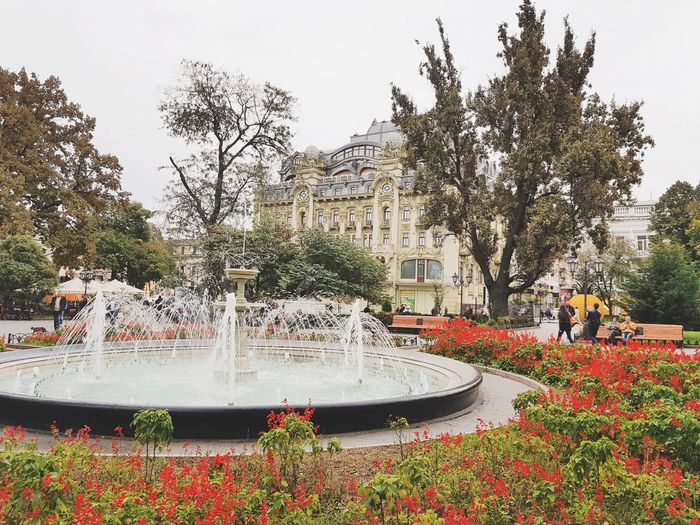 Water Fountain Tree Spraying Outdoors Day Growth Red Flower Swimming Pool Nature People Sky