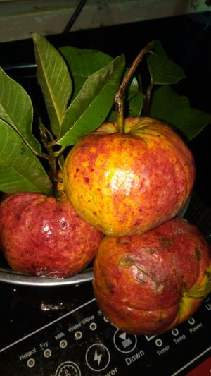 Guava red India