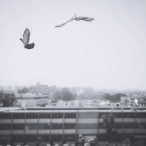 Go Blackandwhite Black And White Black & White Blackandwhite Photography Birds Doves
