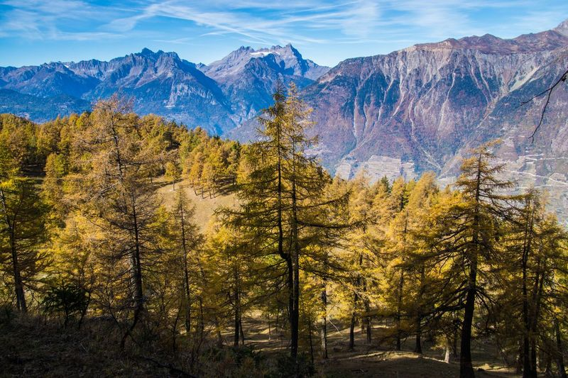 col of lien,valais,swiss Mountain Scenics - Nature Beauty In Nature Tree Plant Tranquil Scene Mountain Range Environment Non-urban Scene Sky Tranquility Nature No People Landscape Land Forest Cloud - Sky Day Travel Destinations Idyllic Outdoors Pine Tree Coniferous Tree Formation
