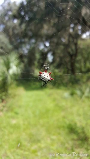 Taking Photos Check This Out Nature Photography StateParks Protected Areas Nature Trees Spider Crabspider Wildlife & Nature