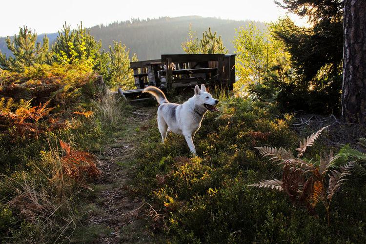 Dog running in grass