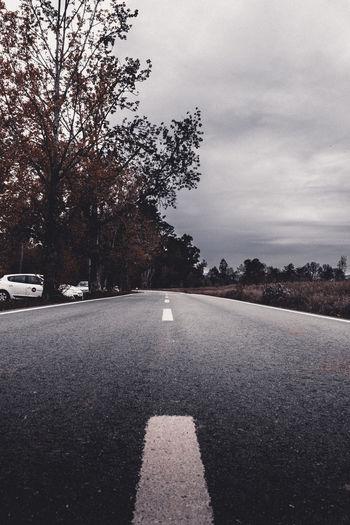 Road Tree Sky