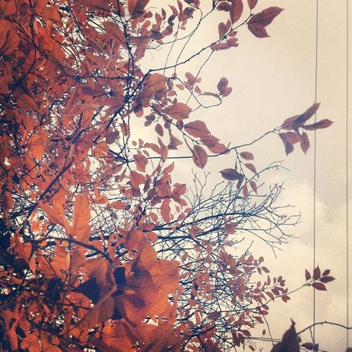Iran Hamedan Fall Autumn Tree Branches Leafs Hamadan همدان عباس آباد ایران