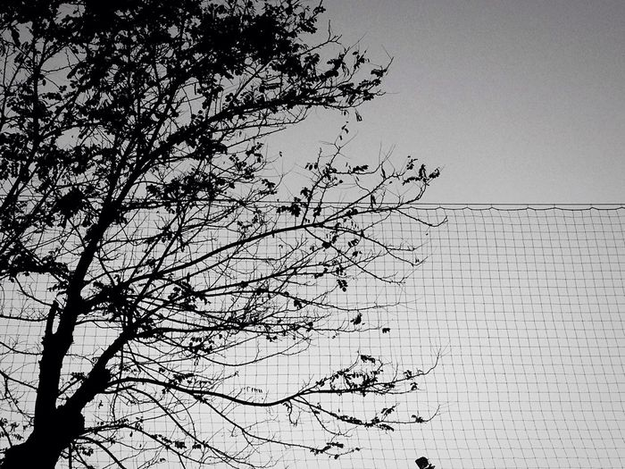 Low angle view of birds on tree against sky