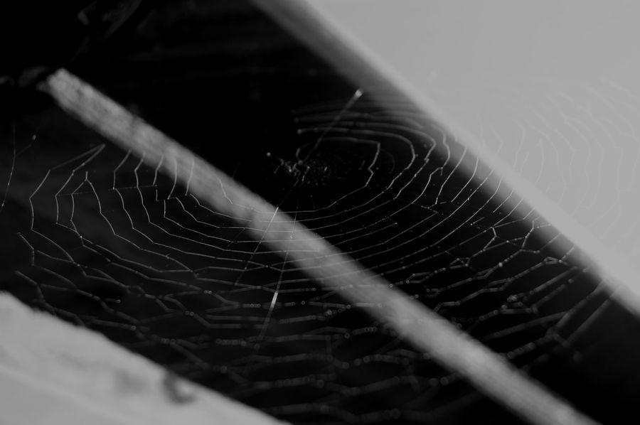 Abstract Animal Themes Atmosphere Blackandwhite Catching The Light Close-up Cobweb Day EyeEm Best Shots - Black + White EyeEm Gallery EyeEm Nature Lover Fragility Garden Photography In The Light Light And Shadow Looking Up No People Shadow Spider Web Spiderweb Weaving