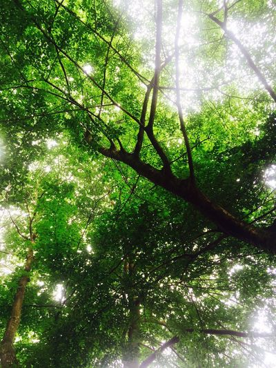 Plant Sunlight Tree Green Color Nature Growth Day High Angle View First Eyeem Photo EyeEmNewHere